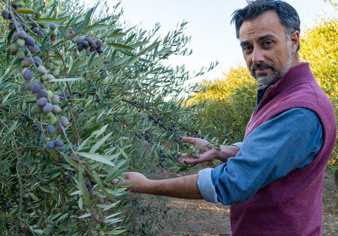 High-quality extra virgin olive oil from Chile