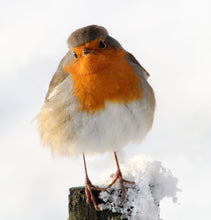 Load image into Gallery viewer, European Robin