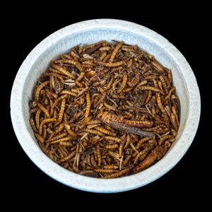 Mixed Dried Insects