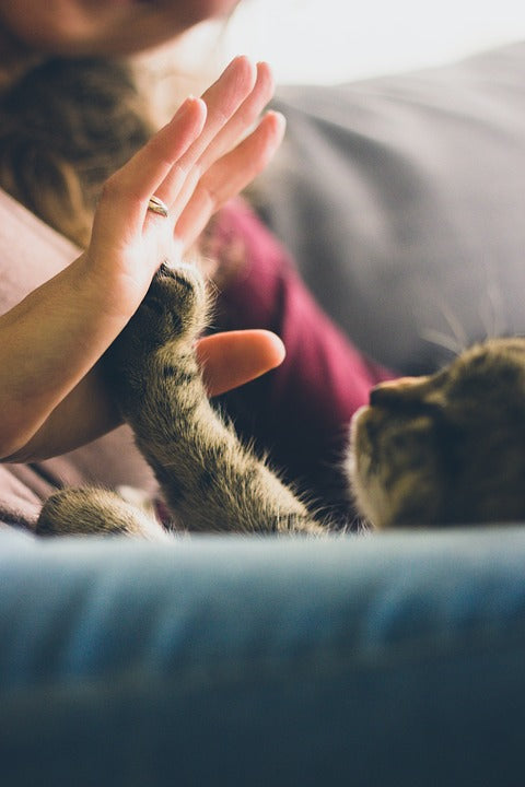 Facts You Didn't Know About Your Cat's 'Self Care'