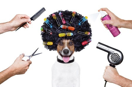 dog-groomer-zen-dogs-2