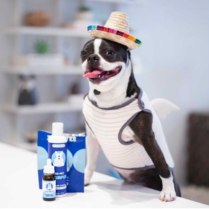 Four Ways to Celebrate Cinco de Mayo with Dogs