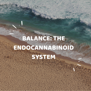 BALANCE: THE ENDOCANNABINOID SYSTEM