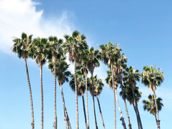 Rodeo Drive: A Must go-to Destination When in LA