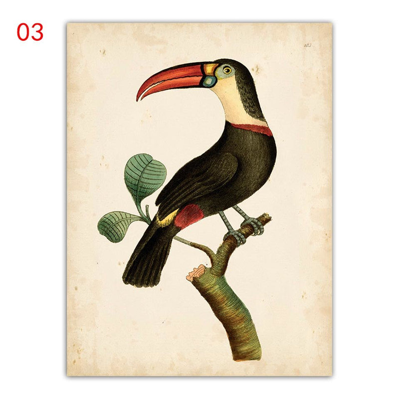 Everything.Bargains Fashion Canvas Animal Painting Nordic Print Toucan Parrot Pictures Colorful Toco Bird Sparrow Poster Wall Art Bedroom