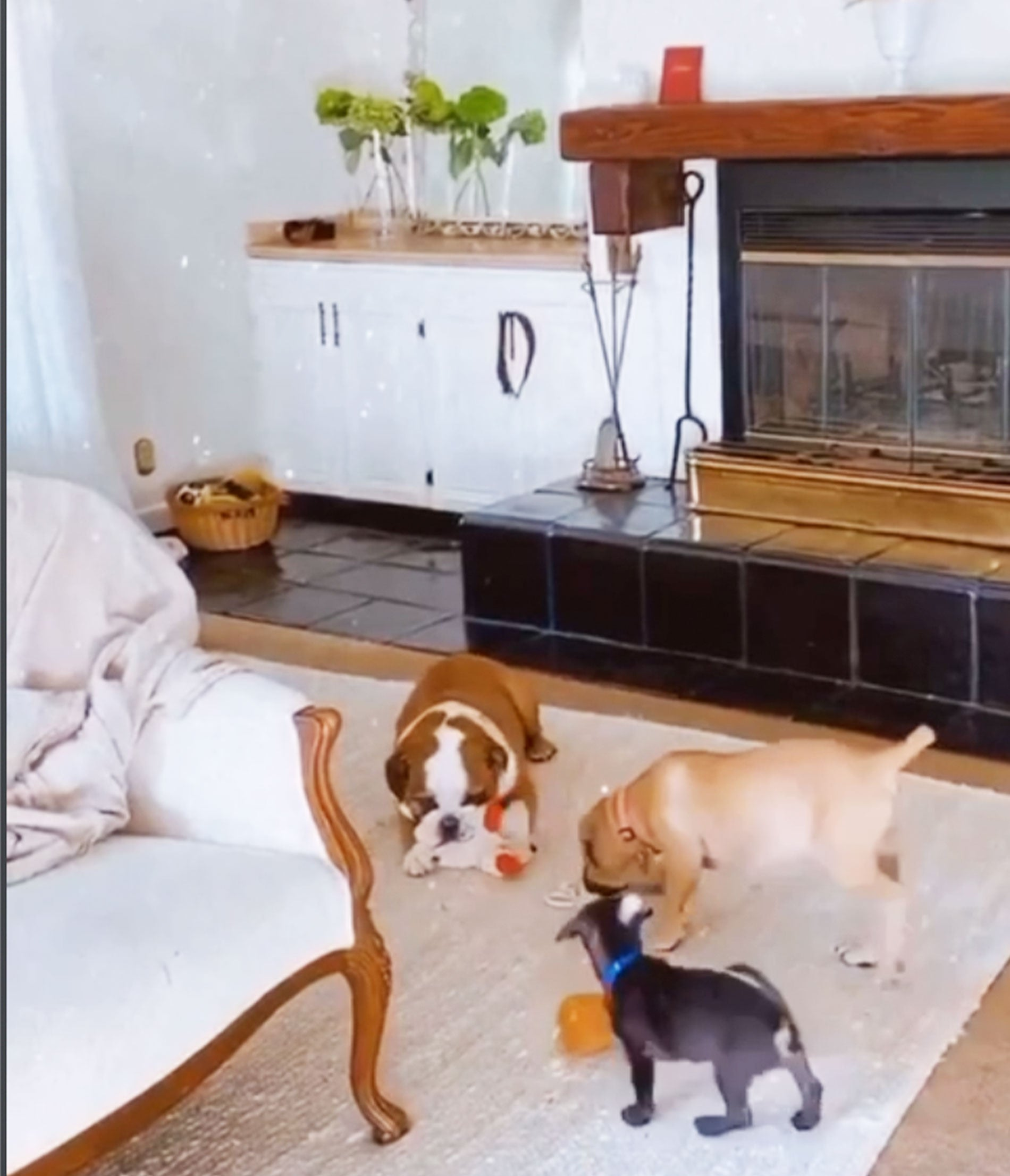 Pia's Dogs