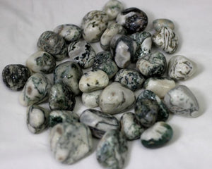 Tree Agate Tumble