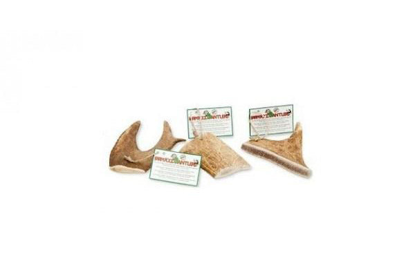 FARM FOOD FALLOW ANTLER - Koira
