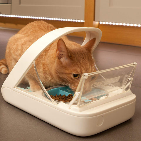 Automatic Pet Feeder Makes Meal Times Stress-Free