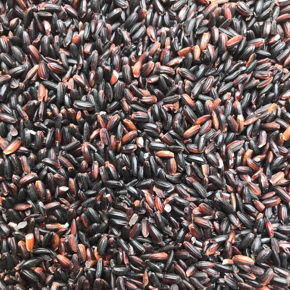 Sable Long Grain Black Rice