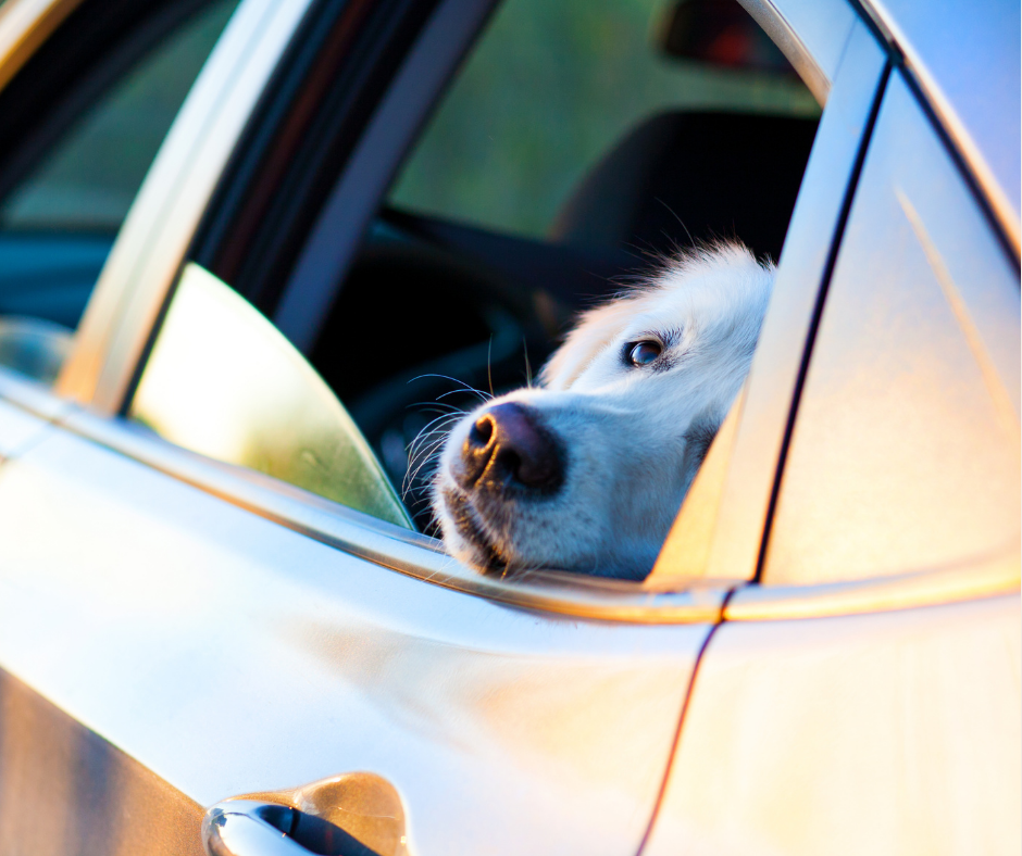 The Best Car Accessories for Any Dog Lover