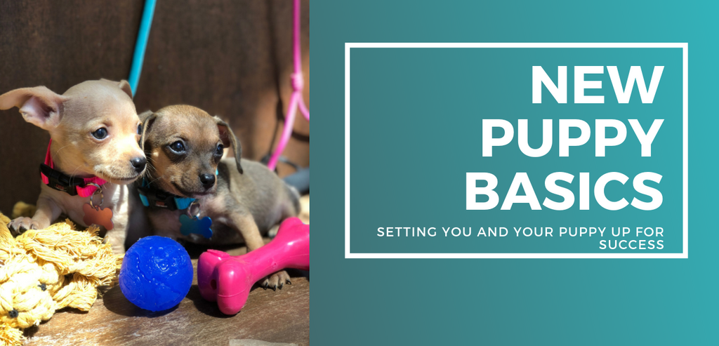 New Puppy Basics