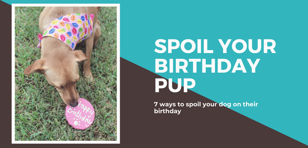 Spoil Your Dog on Their Birthday