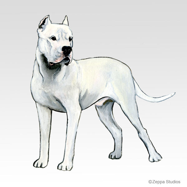 Dogo Argentino 8 Pack Notecards