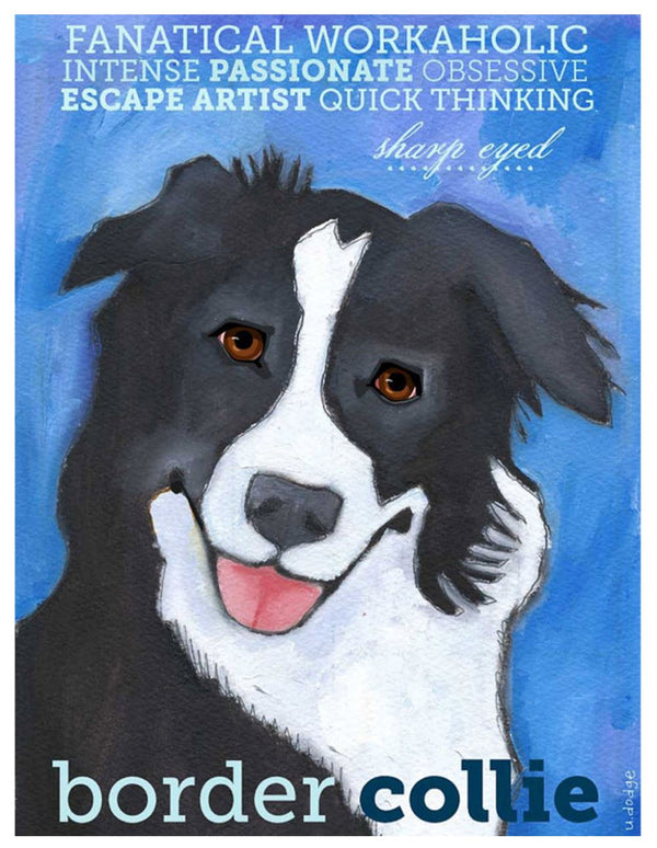 Border Collie 3 x 4 Sticker