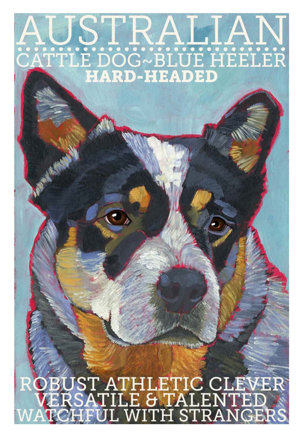 Australian Cattle Dog 3 x 4 Sticker