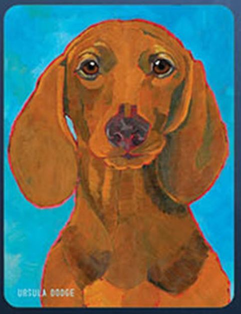 Dachshund 3 x 4 Sticker