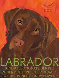 Chocolate Labrador Retriever 3 x 4 Sticker