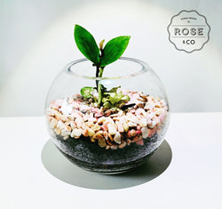 Plants in fishbowl