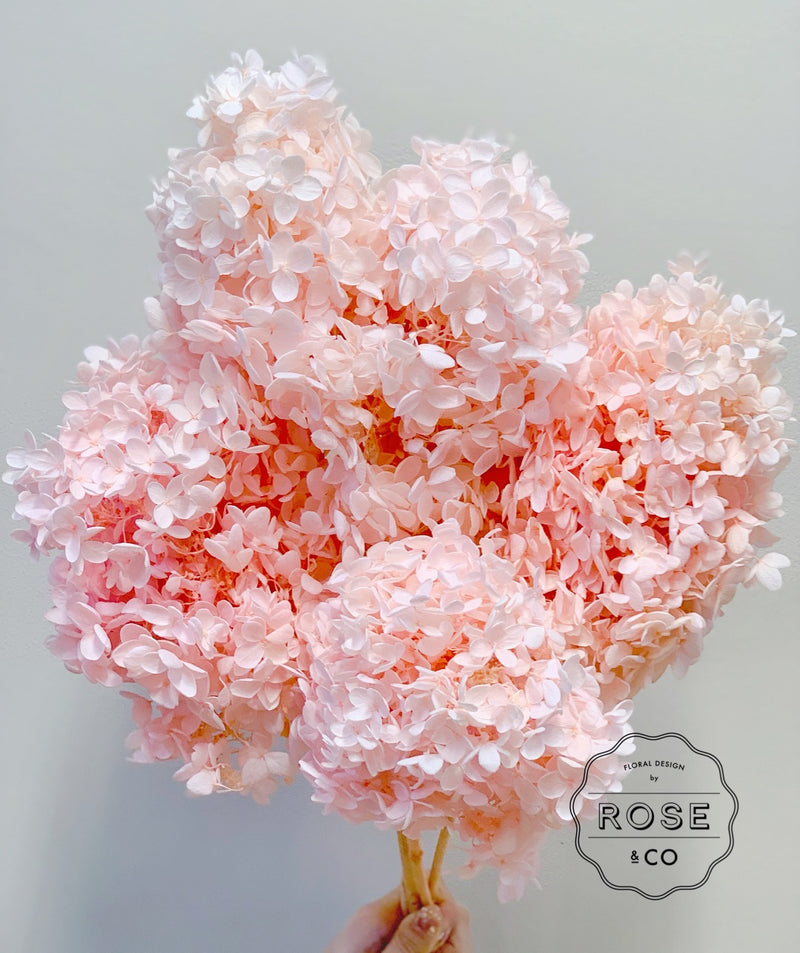 Preserved hydrangea pale pink colour
