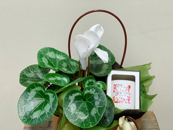 Flowering Plant including a candle in a gift bag