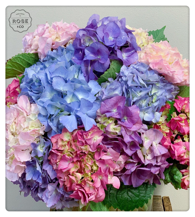 Hydrangea bunch in the vase