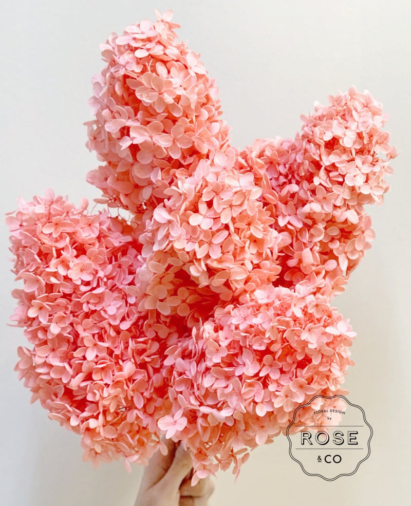 Preserved Hydrangea Peach Colour