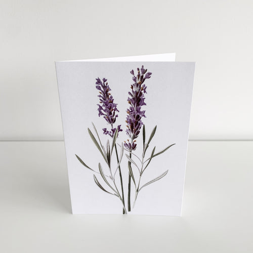 Standard Greeting Card - Lavender Homewares nz