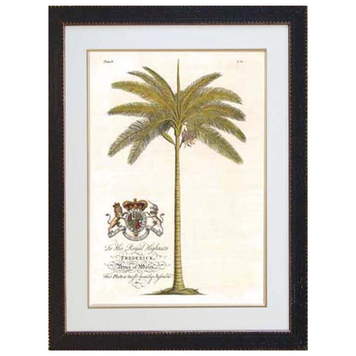 Crested Royal Palm Print In Black Frame  Homewares nz