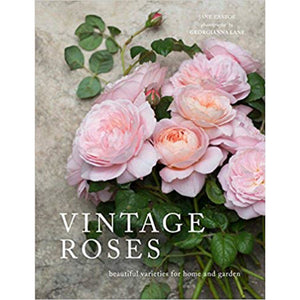Vintage Roses by Georgianna Lane  Homewares nz