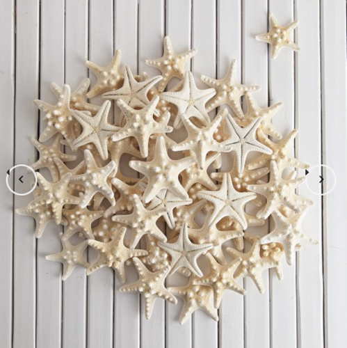Horn White Starfish - Medium