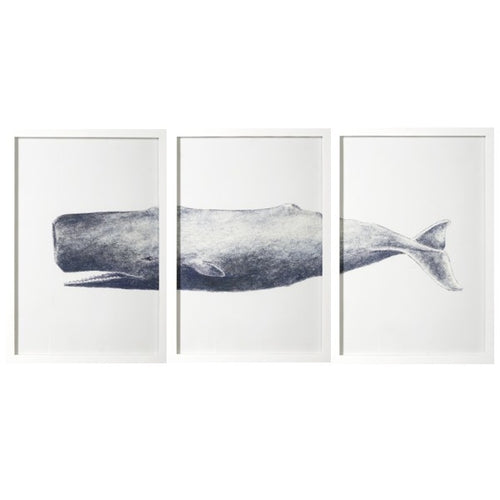 3 Piece Whale Print In White Frame  Homewares nz