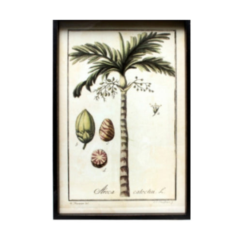 Areca Palm Tree Print In Frame Homewares nz