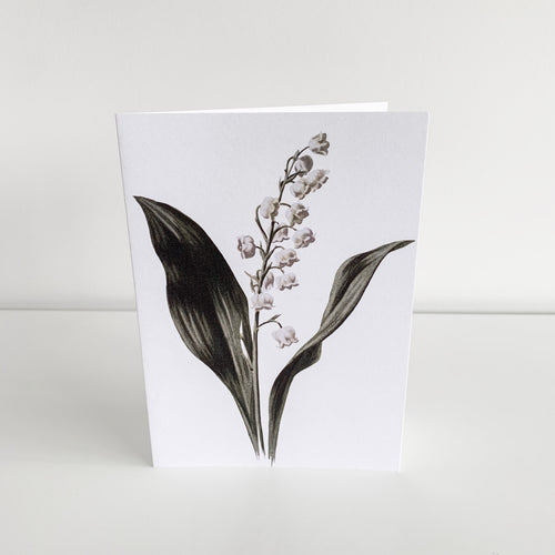 Standard Greeting Card - Lily Of The Valley Homewares nz