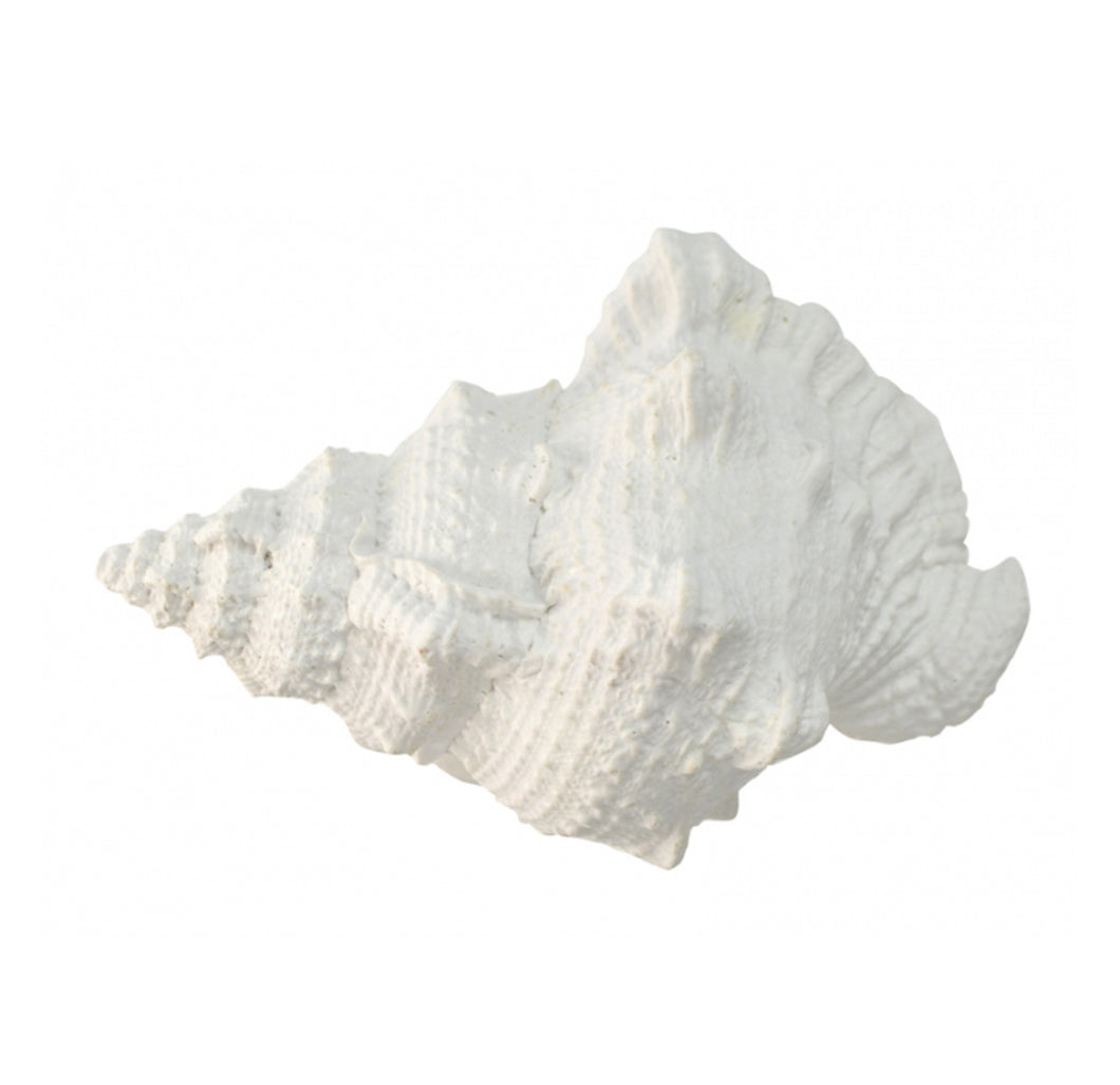 White Poly Sea Snail Shell - Large Homewares nz