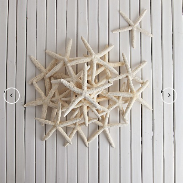 Flat White Starfish - Small  Homewares nz