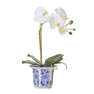 Butterfly Orchid Chinoiserie Pot - Small  Homewares nz