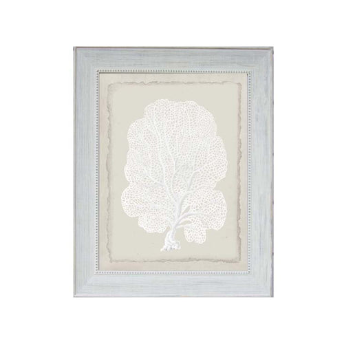 White Sea Fann Coral Print In Beaded Frame  Homewares nz