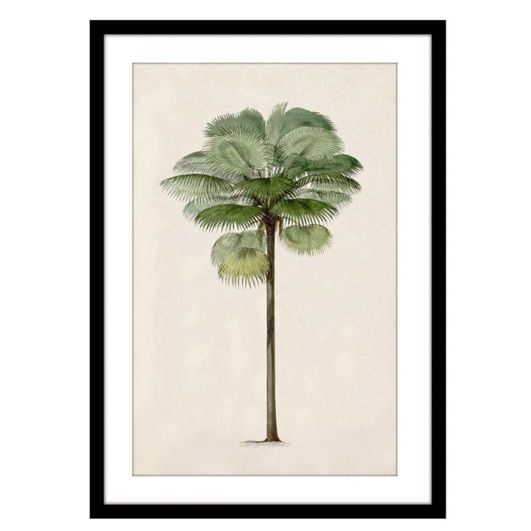 Silver Thatch Palm Tree Print In Black Frame 50x70cm Homewares nz