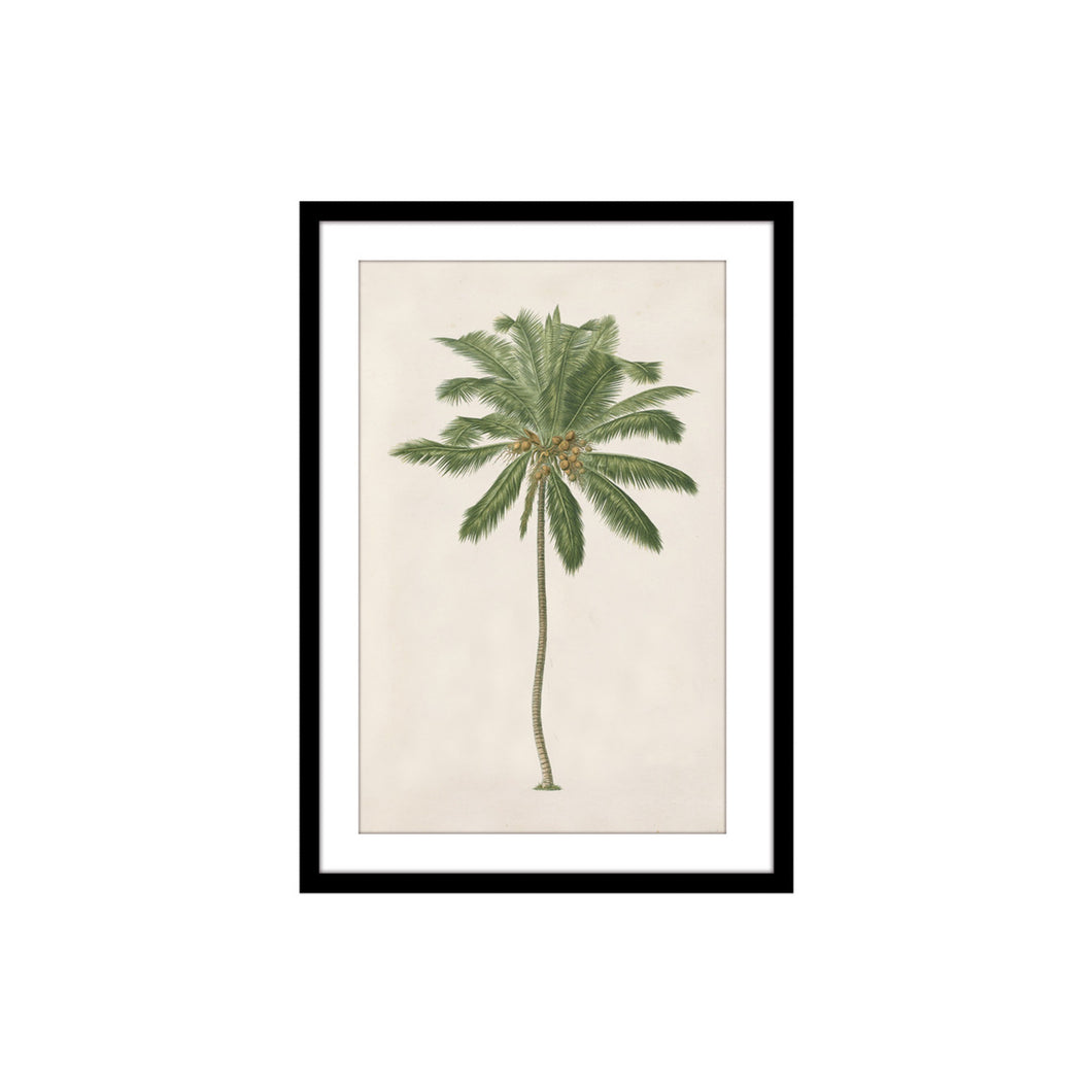 Coco Palm Tree Print In Black Frame 30x40cm  Homewares nz