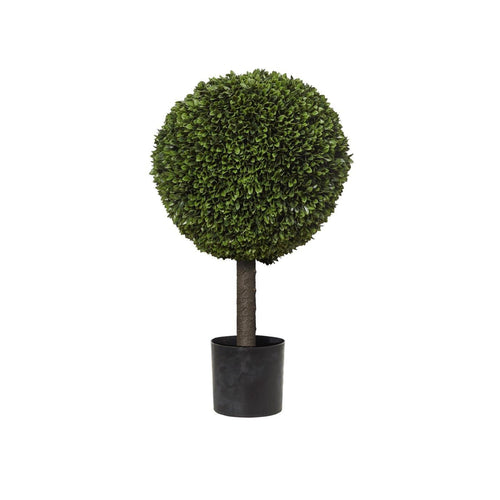 Box Leaf Ball Topiary In Pot 76cm