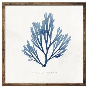 Blue Coral Wall Art In Wooden Frame  Homewares nz