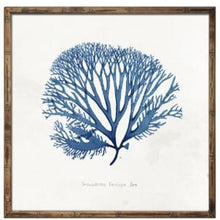 Load image into Gallery viewer, Blue Coral Wall Art In Wooden Frame  Homewares nz
