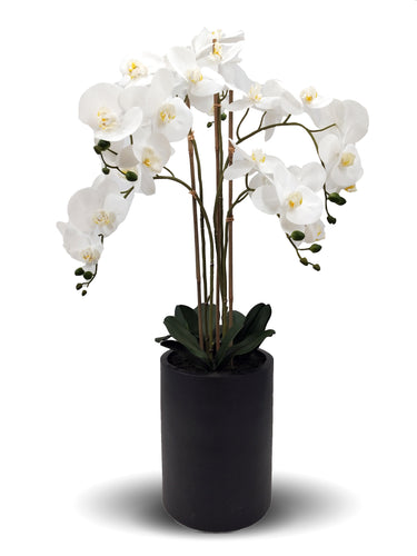 Faux Orchids In Tall Black Pot 105cm