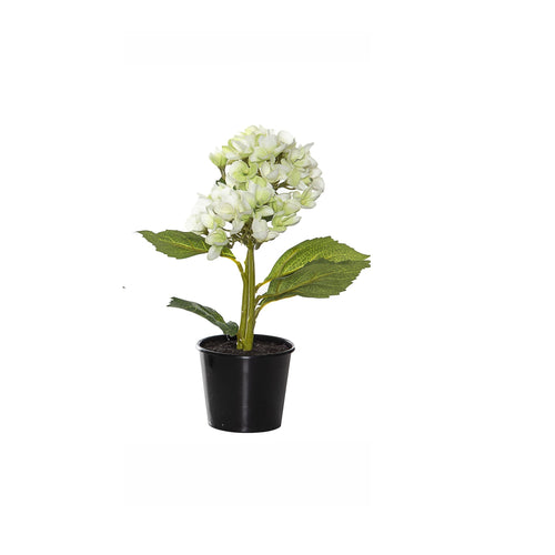 Hydrangea Pick In Black Garden Pot 24cm - Green
