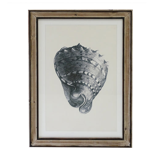 Shell Sketch Print In Distressed Frame