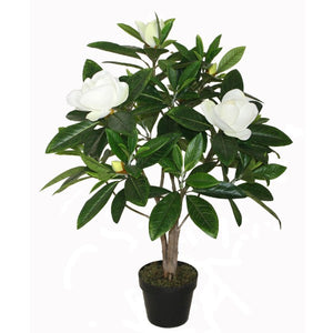 Potted Magnolia Tree 90cm  Homewares nz