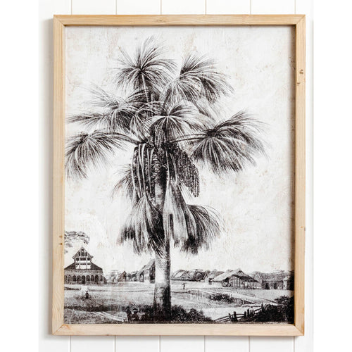 Vintage Palm Tree Photo Print In Natural Frame 55x70cm  Homewares nz