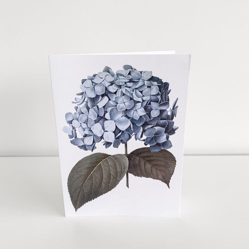 Standard Greeting Card - Blue Hydrangea Homewares nz