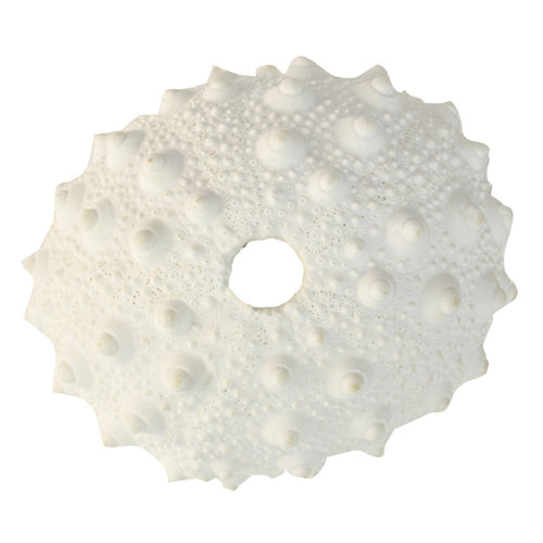 Spikey Urchin Coral  Homewares nz